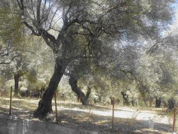 , Agios Nikitas